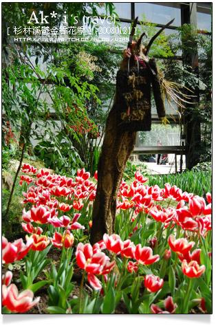 【杉林溪鬱金香花季】杉林溪遊樂區~杉林溪鬱金香花季