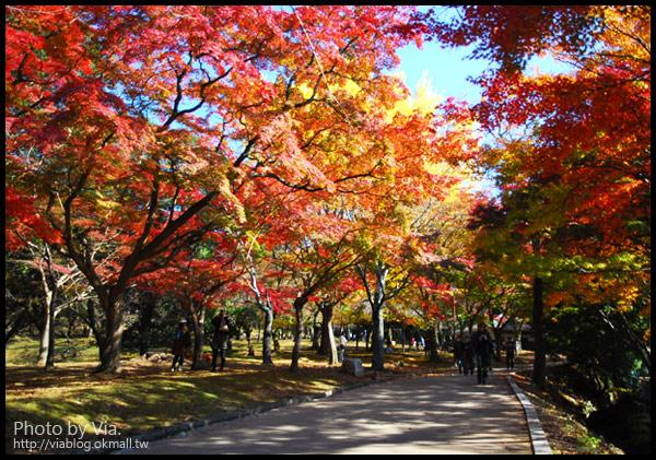 【Via京都賞楓】Day3●紅通通的奈良~春日大社及東大寺