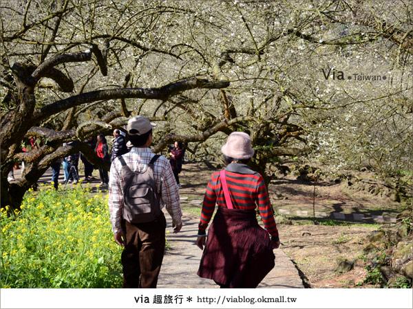 【信義賞梅】賞梅一日遊~烏松崙森林渡假營賞梅+信義鄉農會