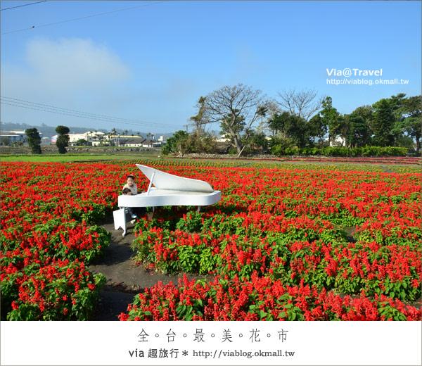 【中社花海】中社觀光花市~滿滿的鬱金香在這裡綻放了!