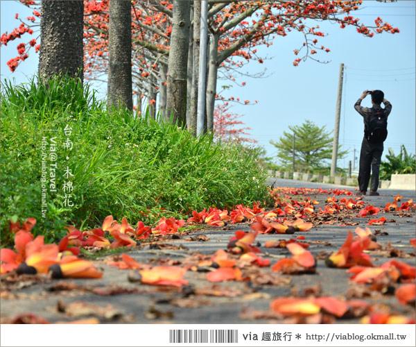 【白河木棉花】台南白河林初埤木棉花道~一個橘紅色交織而成的美麗世界!