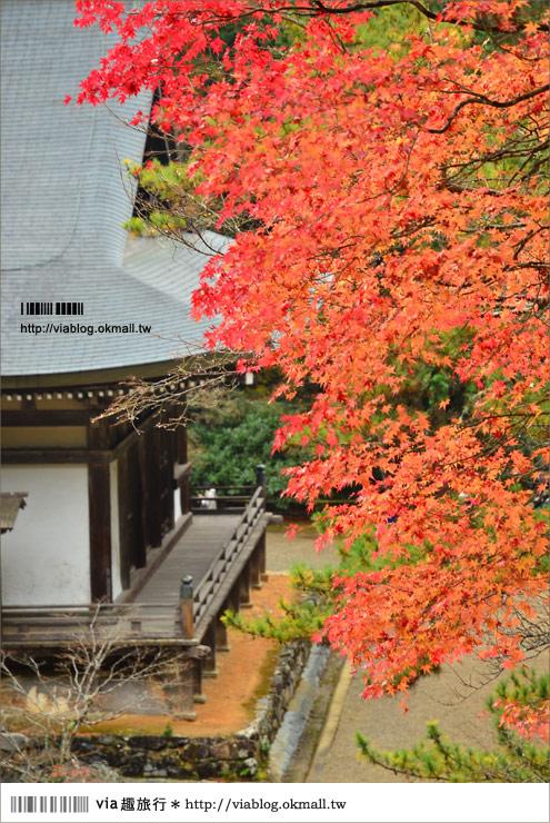 【紅葉最前線】京都|高雄神護寺~via*2012京都紅葉紀旅的華麗首站!