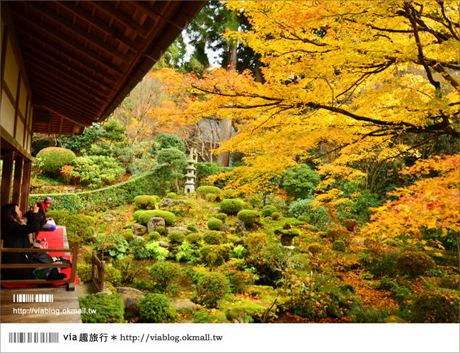 【京阪神自由行】關西賞楓懶人包!大阪、京都、奈良|Via的紅葉美景全記錄♥ (目前收集28個,持續更新中)