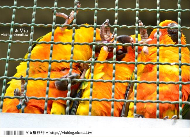 【南投鹿谷一日遊】南投鹿谷鄉鳳凰谷鳥園~百種珍禽、綠蓊翠林等您來玩!