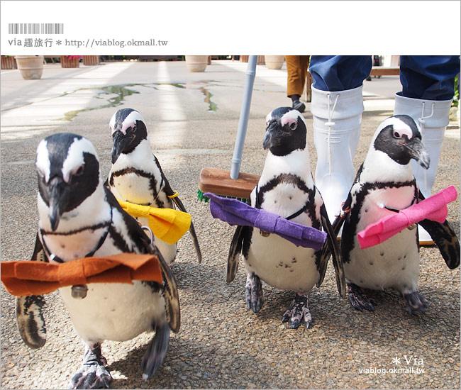【島根必玩景點】必去!松江貓頭鷹樂園~via最愛的島根玩樂景點!