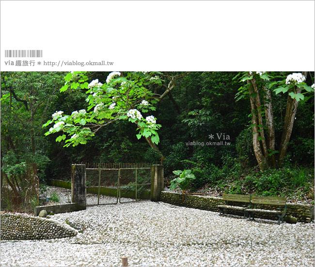 【油桐花季】挑水古道~今年依舊從此地,開啟我的桐花旅程。