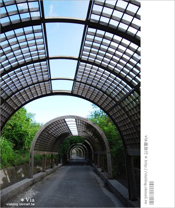 【台東旅遊景點】台東森林公園~悠閒騎單車、走入大自然的好去處!