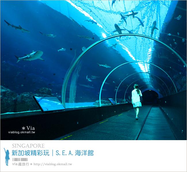 【新加坡觀光景點】新加坡SEA海洋館~全球最大的海洋館約會去!