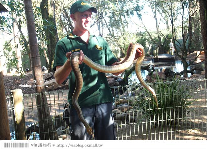 【雪梨自由行】雪梨一日遊DayTour(上):Featherdale wildlife park超精彩必遊動物園
