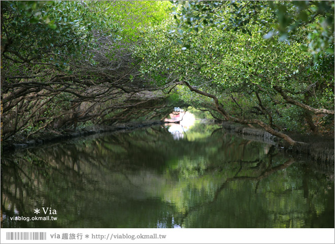 【台版亞馬遜河】台南四草紅樹林綠色隧道~絕美!搭乘竹筏出遊賞景趣