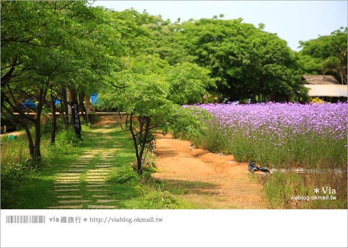 【桃園景點一日遊】親子旅遊景點~青林農場‧紫色馬鞭草花海無敵浪漫!4