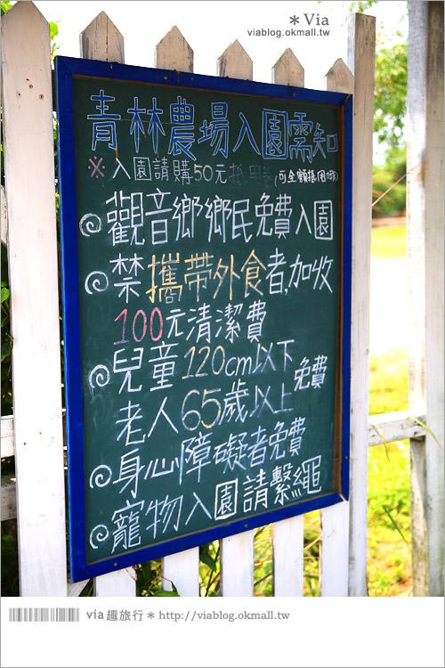 【桃園景點一日遊】親子旅遊景點~青林農場‧紫色馬鞭草花海無敵浪漫!3