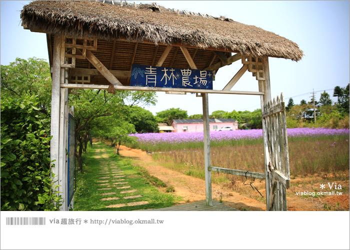 【桃園景點一日遊】親子旅遊景點~青林農場‧紫色馬鞭草花海無敵浪漫!2