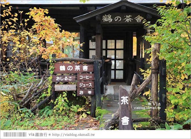 【秋田溫泉】日本秘湯~乳頭溫泉鄉/鶴之湯溫泉。日本前三名的秘湯美境~紅葉相伴美極了!