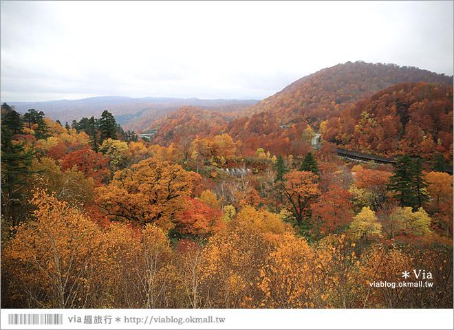 【東北賞楓推薦】秋田國道341號~又是一條爆炸美的紅葉公路!一山又一山的秋紅相伴