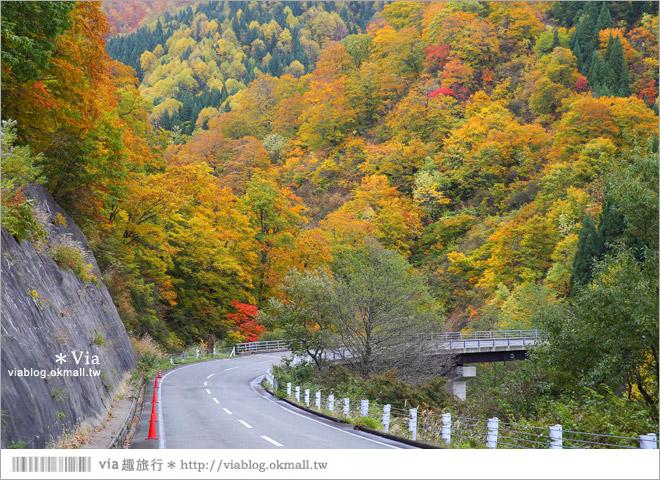 【東北賞楓】秋田國道398號~不思議的紅葉公路!沿途紅葉美景相伴,處處都是美炸的景色