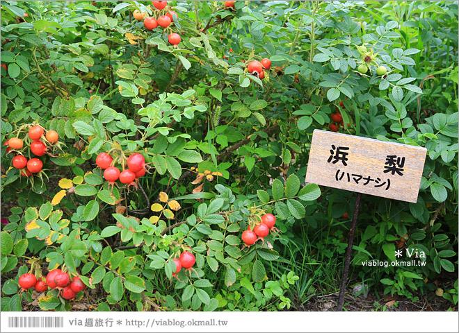 【北海道景點】帶廣景點推薦:六花之森~六花亭的甜點森林!夢幻的包裝紙屋好浪漫!