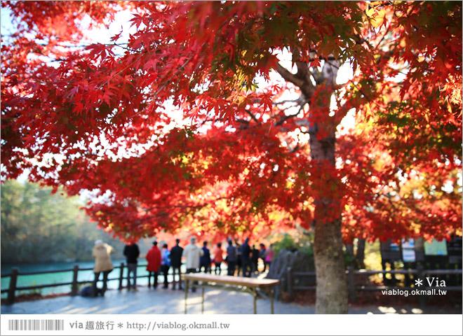 【福島景點推薦】五色沼~福島的人氣景點!搭配紅葉的夢幻湖沼之旅