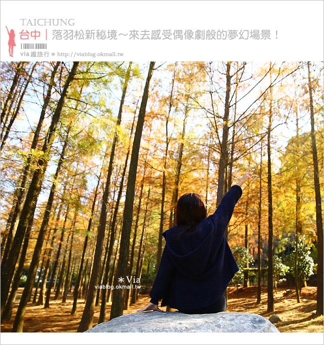 【台中落羽松秘境】后里泰安落羽松林~寧靜夢幻的新秘境!