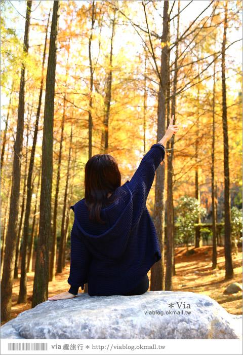 【台中落羽松秘境】后里泰安落羽松林~寧靜夢幻的新秘境!21