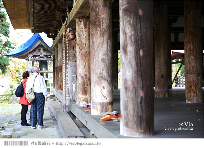 【福島喜多方景點】新宮熊野神社~八百多年大銀杏樹!值得一賞的秋季銀杏美景!