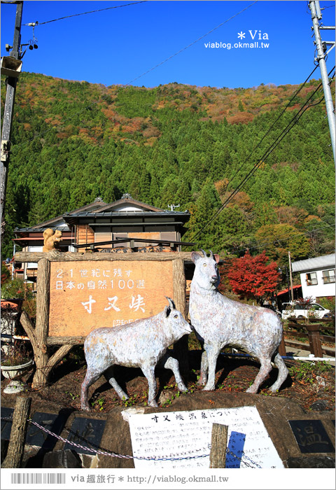 【靜岡旅遊景點】秋季秘境之旅~寸又峽溫泉『夢之吊橋』,碧藍湖水上的夢幻美景