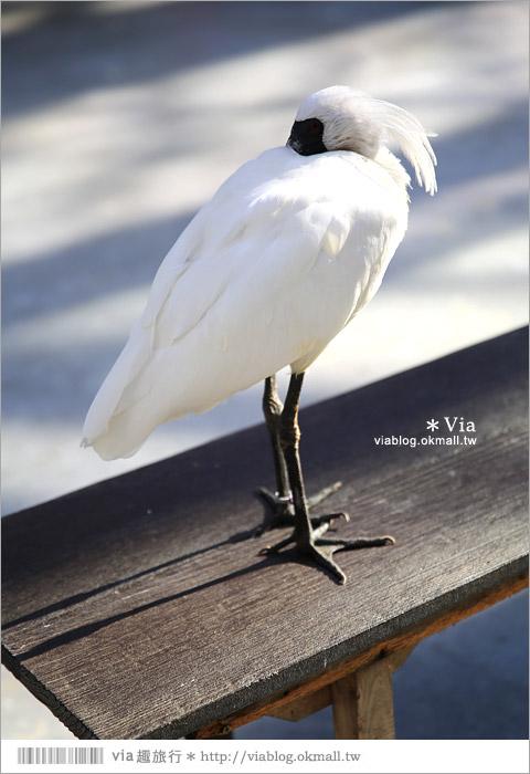 【靜岡景點推薦】掛川花鳥園~愛鳥人&親子旅行大推薦!超有趣的花鳥園~玩到不想走!