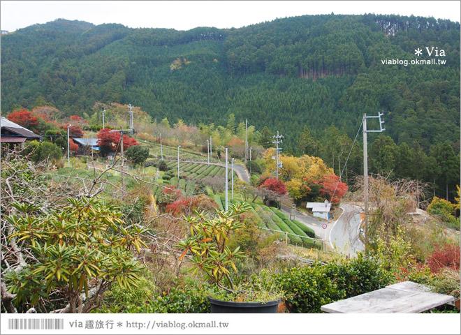 【靜岡民宿推薦】あそびや民宿~來去山上住一晚!靜謐溫馨的山中生活好放鬆!
