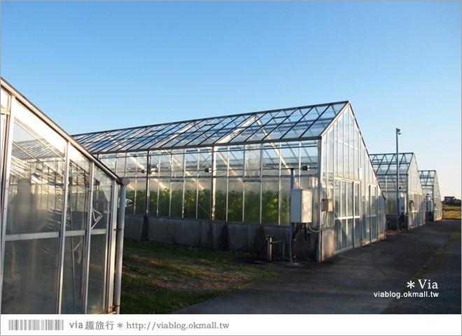 【靜岡甜點】名倉哈密瓜農場(名倉メロン農場 )~幸福香甜的綠色風下午茶!