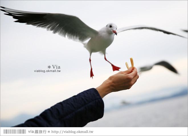 【濱松旅遊(下)】濱名湖一日旅~吃鰻魚飯、搭遊船餵海鷗、搭覽車賞美景!