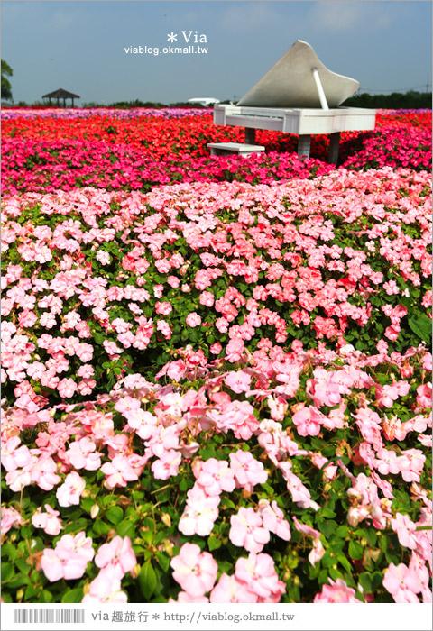 【中社觀光花市】台中中社花海|迷人的花海賞不完~百合花盛開中!