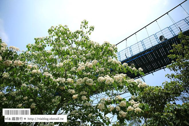 【苗栗桐花祭】九華山天空步道~超美!爆炸滿開的油桐花~苗栗桐花步道推薦!