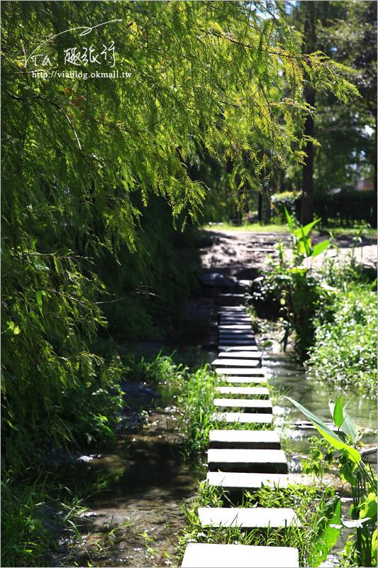 【花蓮雲山水】花蓮景點推薦「雲山水」~夢幻湖畔散步‧落羽松微轉紅好迷人!