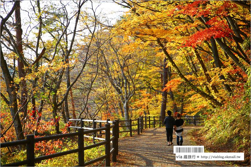 【日本東北賞楓】宮城‧嗚子峽紅葉狩~絕美的紅葉山巒,必賞的東北紅葉景點!