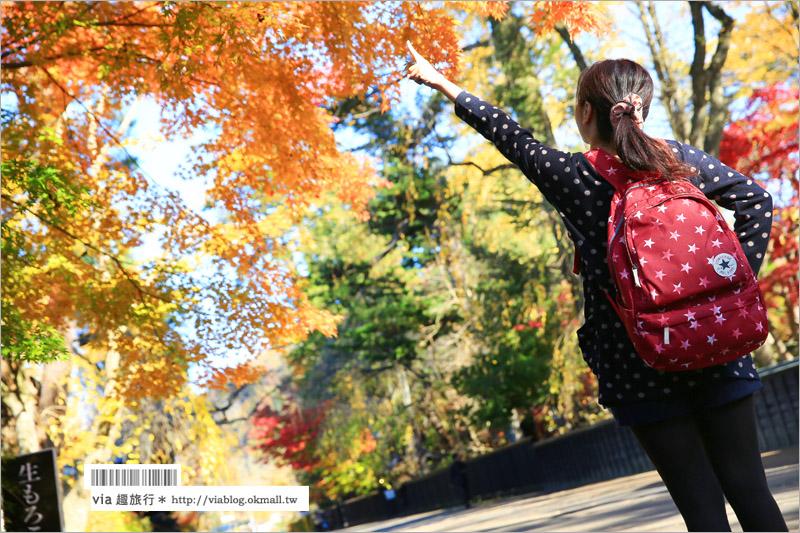 【秋田角館旅遊】角館武家屋敷賞楓~『奧州小京都』秋季紅葉綻放~七彩繽紛的角館美極了!