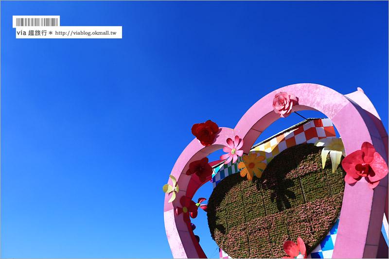 【2015新社花海】爆藍天空下的璀燦花毯~繽紛十年的新社花海,依舊夢幻登場!