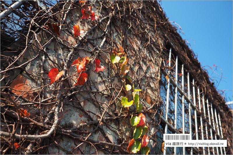 【南投139縣道】29號花園咖啡~眺望大彰化南投的美麗景觀、滿滿的多肉植物好可愛!