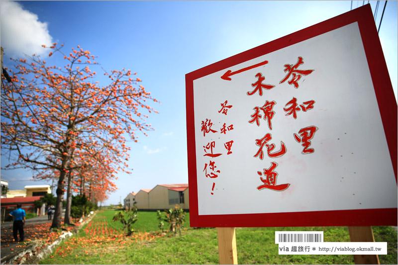 【台南木棉花】台南將軍木棉花道~綻放的火紅!完全不輸白河的美麗木棉花道,盛開ing!