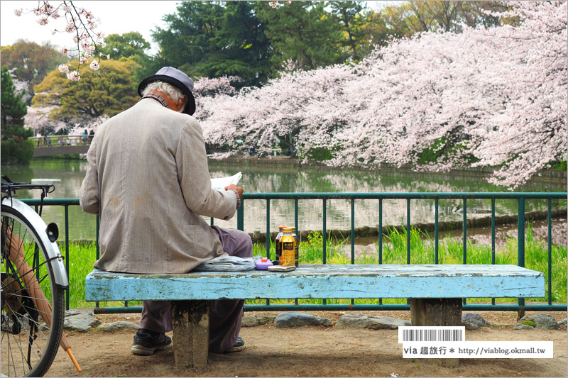 【名古屋櫻花】名古屋城櫻花+名城公園賞櫻記~好美!名古屋必去的賞櫻名所