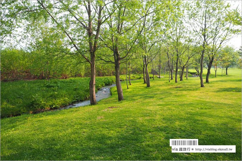 【北海道旅遊景點】十勝千年之森~夢幻的療癒系森林大草原、來去森林散散步!