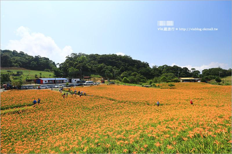 【花蓮赤柯山】金針花大盛開~赤柯三巨石必拍~夏季限定!夢幻黃澄的美麗景色!