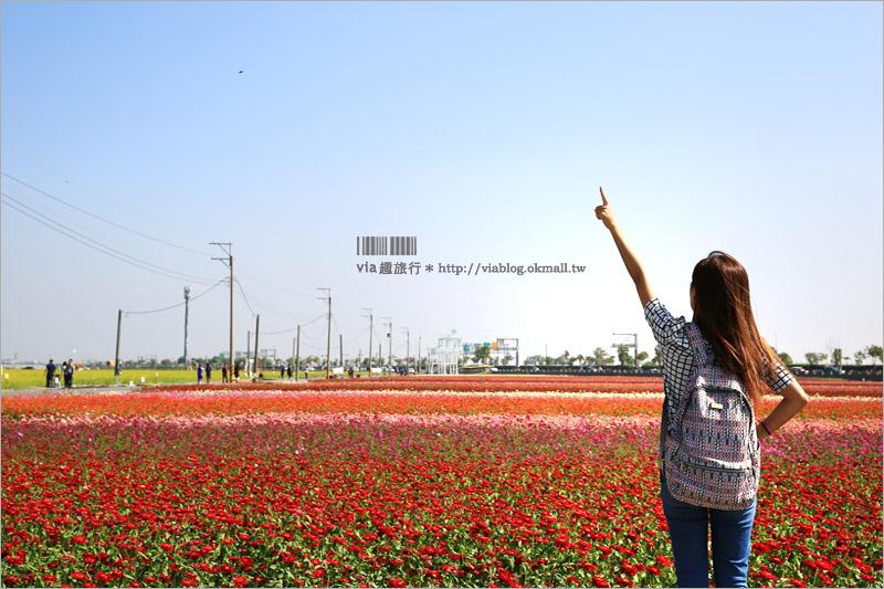 【嘉義花海】太保花海節~七彩花田太夢幻!超大油菜花田中有迷你教堂、小熊和巨石像大好拍!