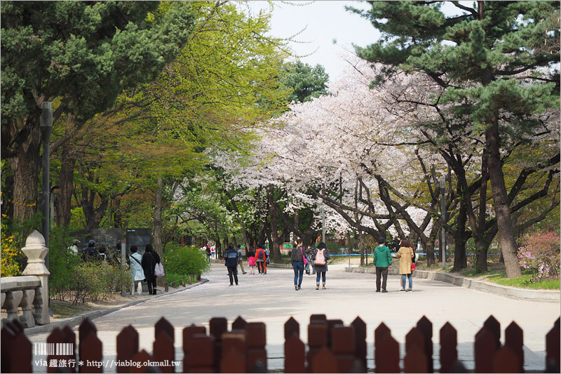 【首爾景點推薦】德壽宮~充滿歷史的韓式宮殿,一旁的德壽宮石牆路更是美不勝收!