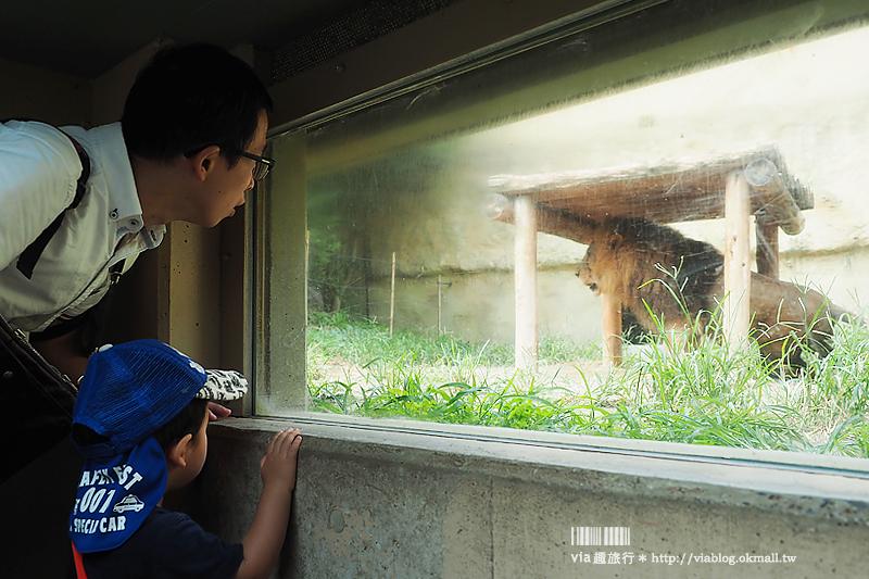 【日本旅遊景點】琦玉‧東武動物公園~適合親子出遊的東京近郊玩點!樂園+動物園一次滿足!