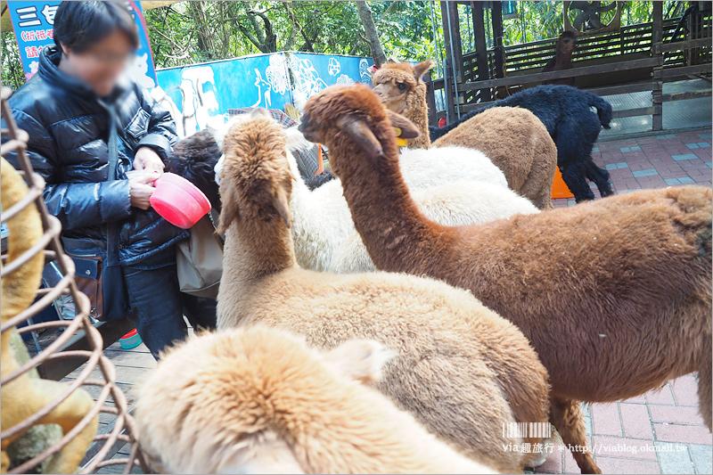 【彰化景點】今夜星辰休閒農場~夢幻愛心廣場網美最愛+可愛草泥馬餵食趣!