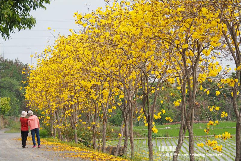 【彰化一日遊】芬園+草屯趴趴玩~賞黃金風鈴木、吃在地小吃、逛景點!就跟著Via醬玩!