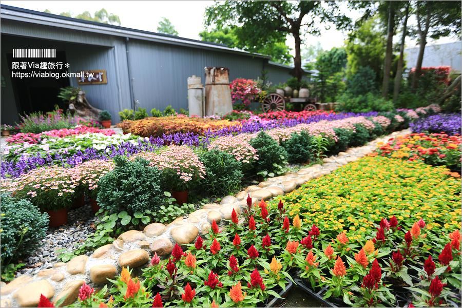 【苗栗景點】花露休閒農場~不止薰衣草!繡球花小花園盛開也很美!