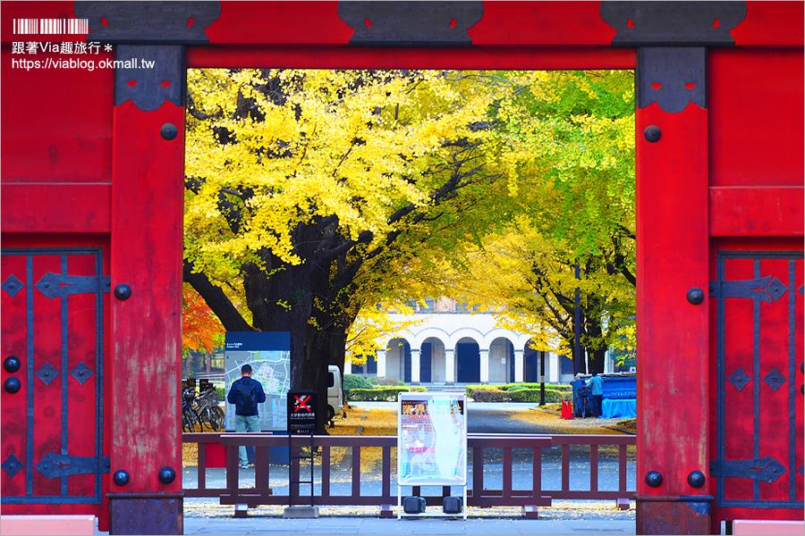 【東京大學銀杏】東京最美秋色!銀杏大道超夢幻~東大必賞三景:赤門、銀杏大道、安生講堂一次攻略!