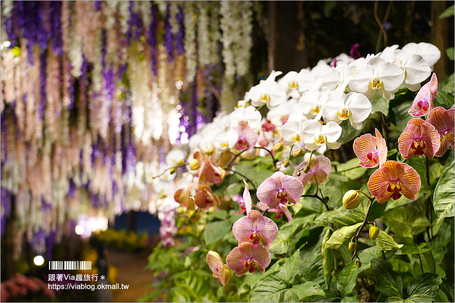 台南景點》大坑休閒農場~親子景點!紫藤花隧道、採草莓、動物互動區及船屋咖啡館