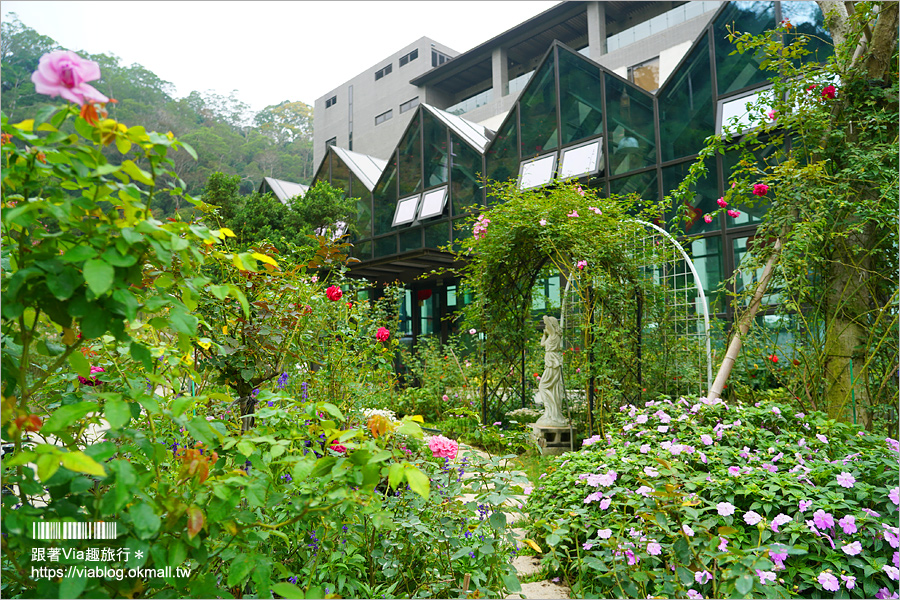 【苗栗景點】雅聞七里香玫瑰森林~上萬株玫瑰相伴的浪漫森林!秘探世界玫瑰花園旅行去!